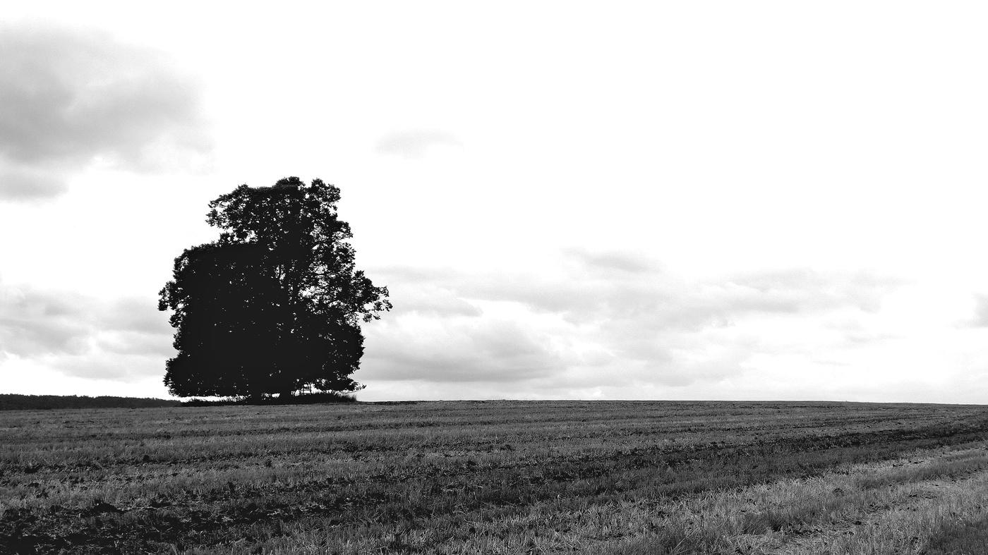 ...Osamělý strom..