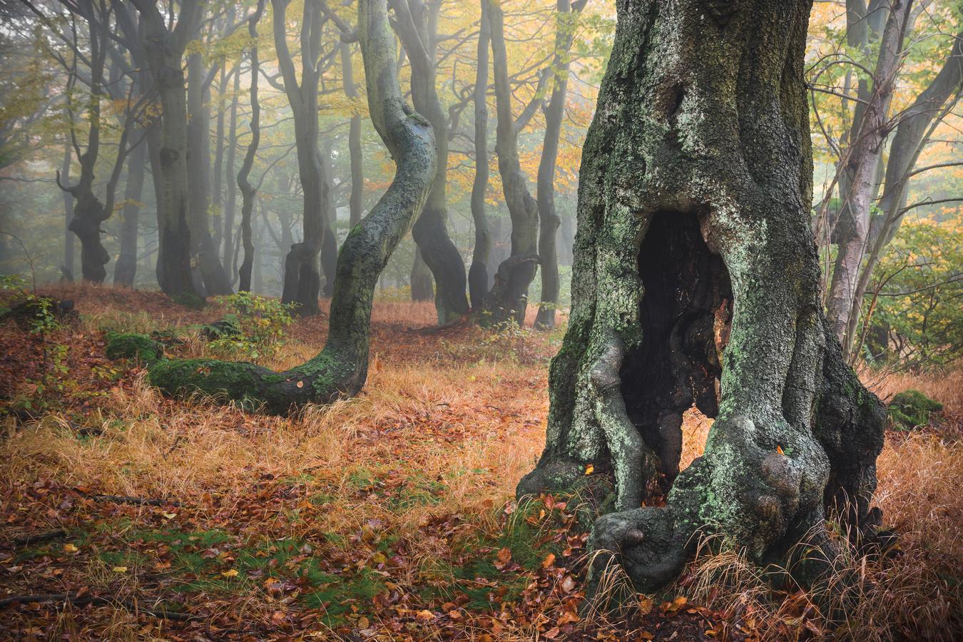 V podzimním lese 2