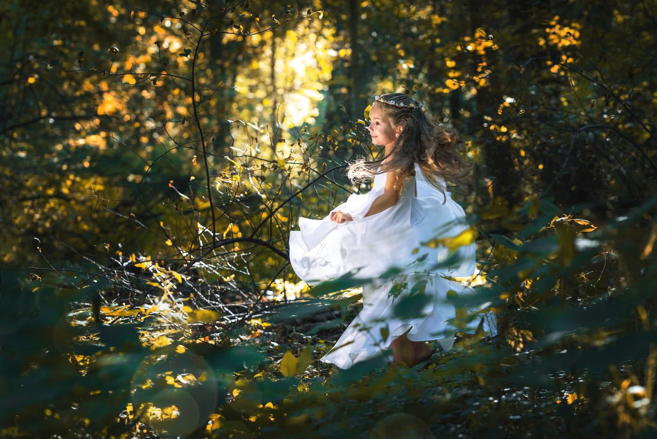 V rytmu lesa