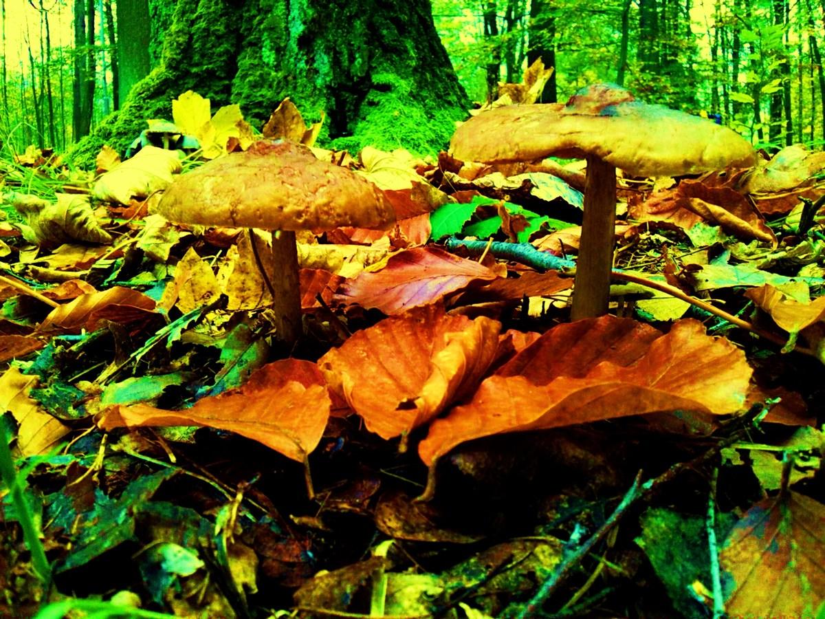 houby s houbama