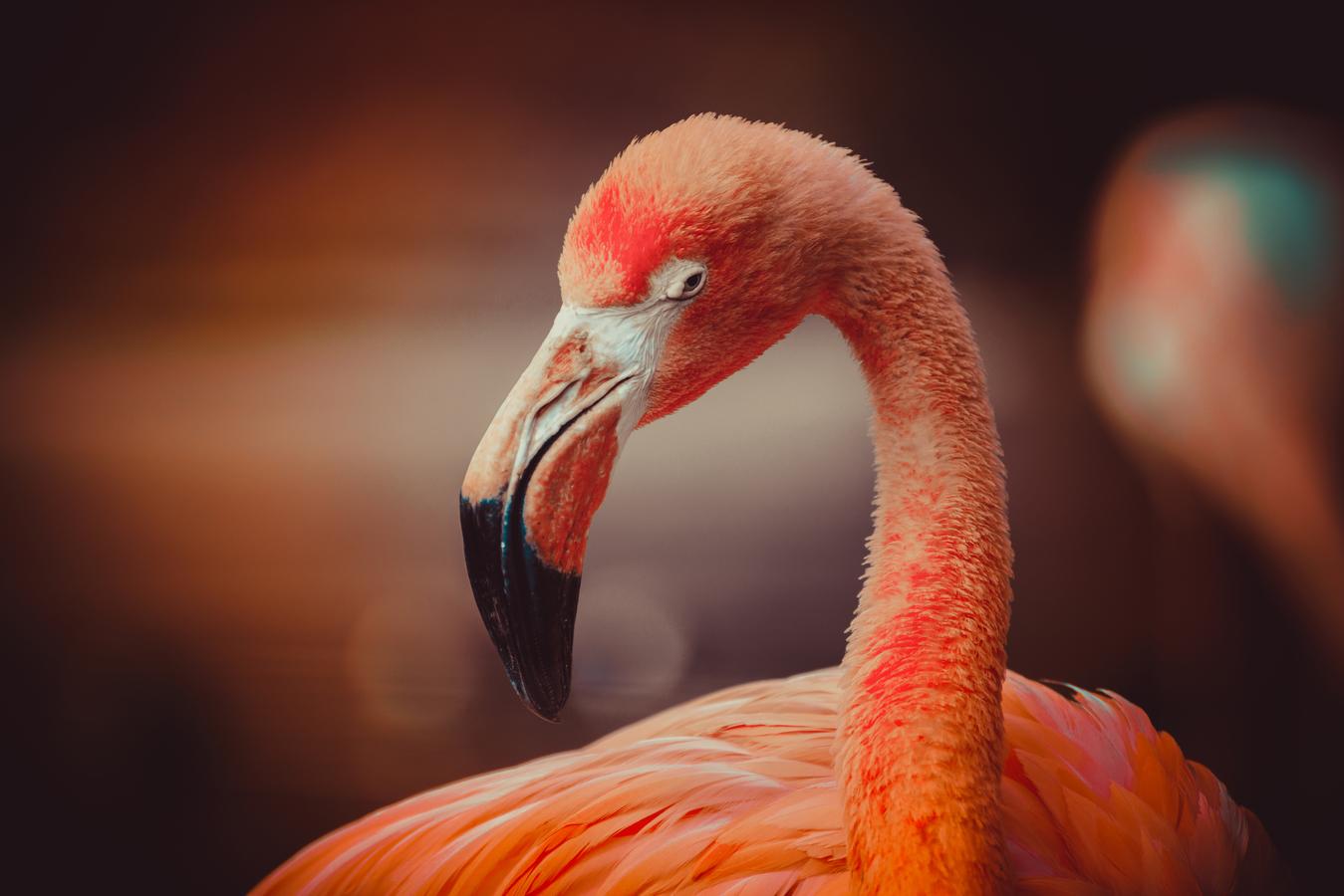 Mr.Flamingo