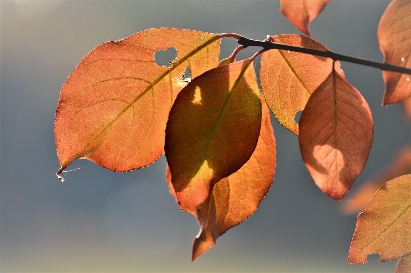 Maličké nedělní probuzení,zívne si podzim k přemýšlení,zda bude malovat dál...