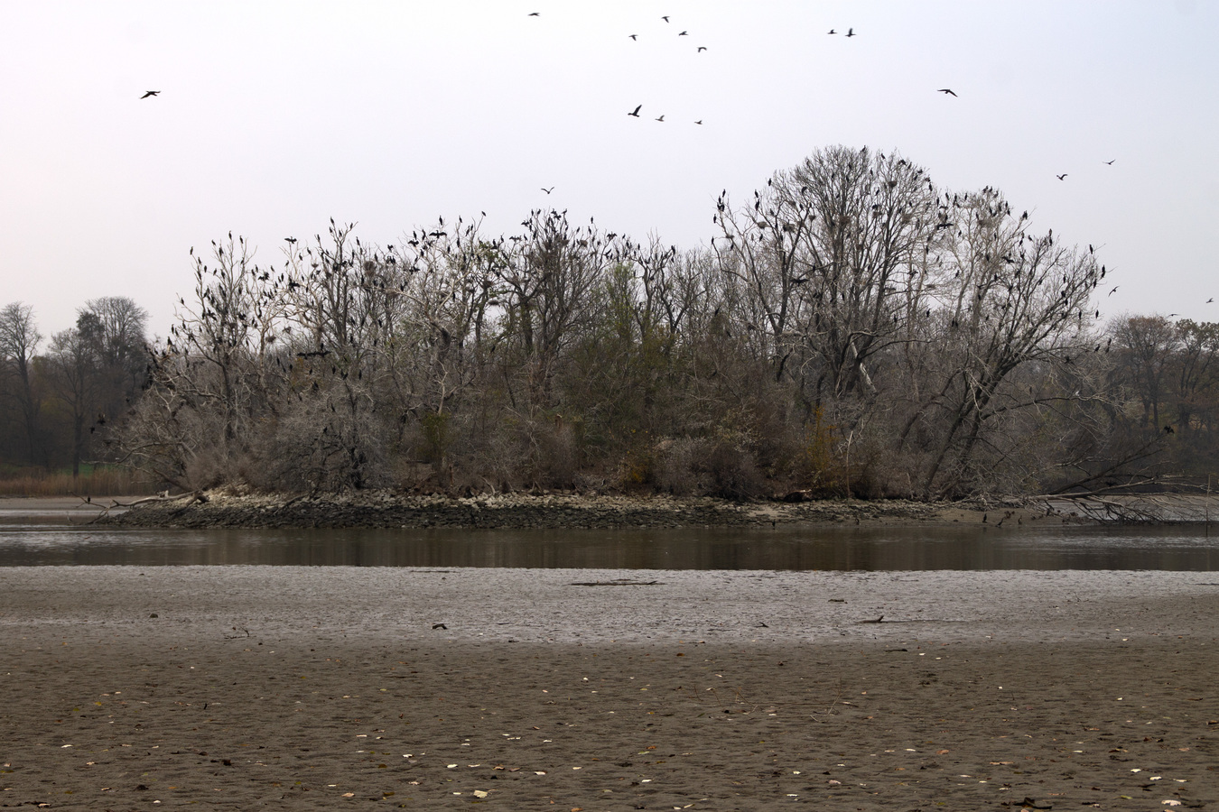 Ptačí ostrov