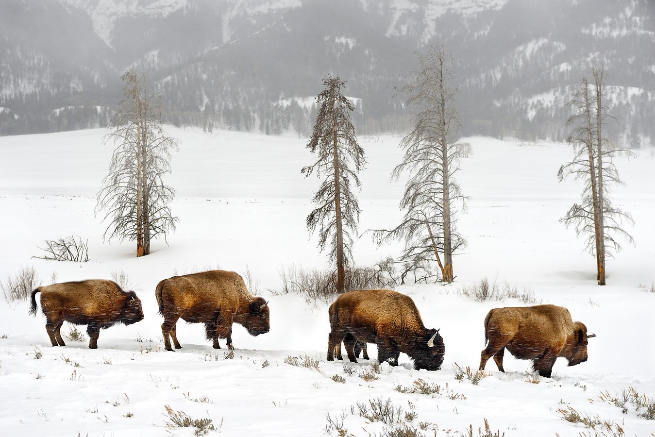 ... co Buffalo Bill již nestihl