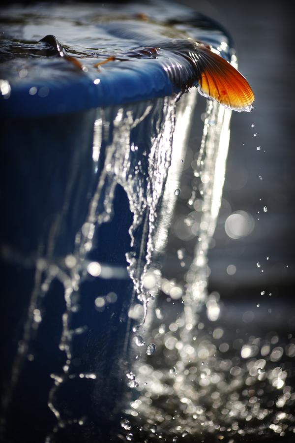 Zlatá rybka...