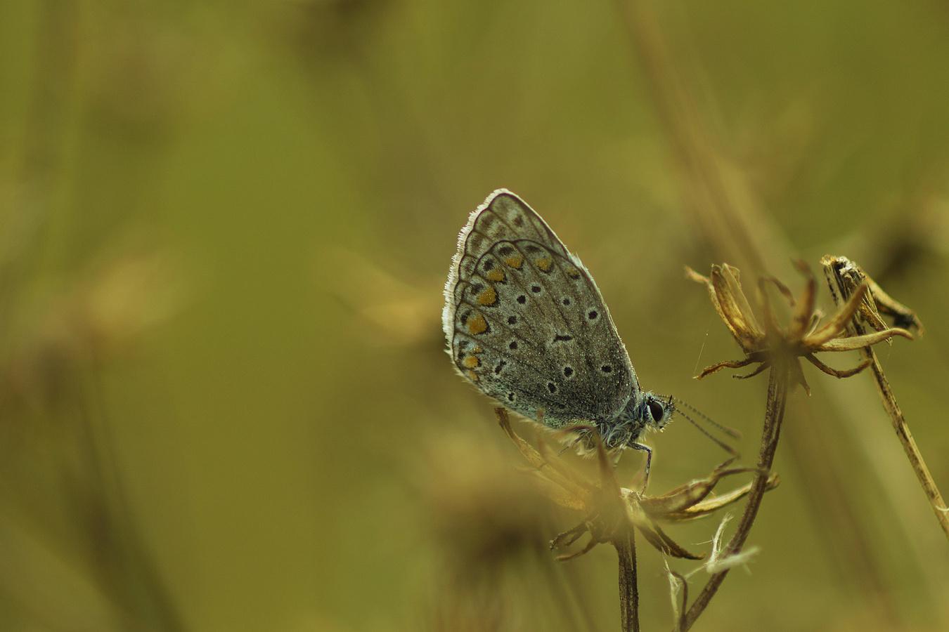 Poslední motýl