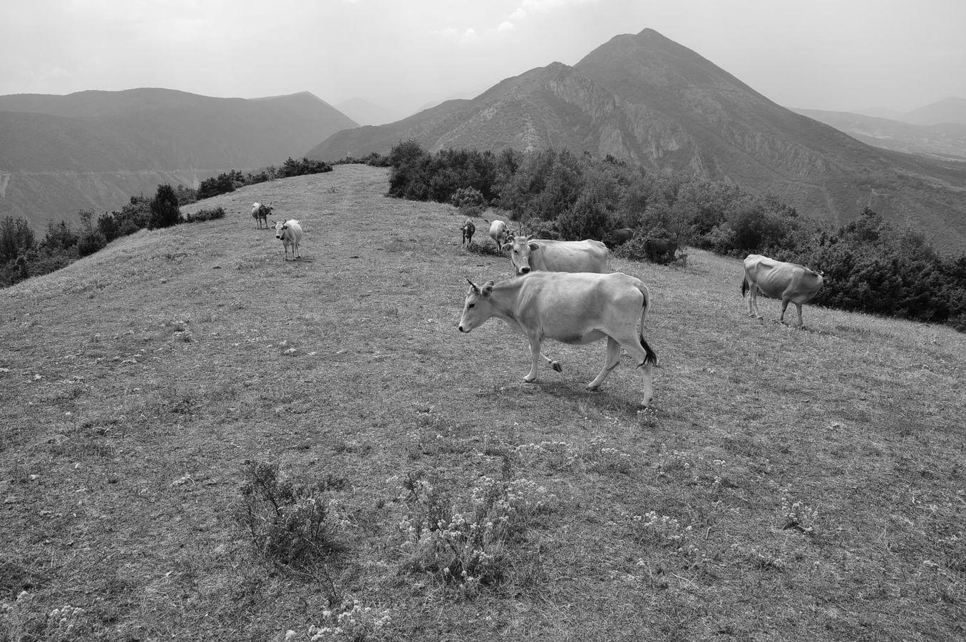 setkání v horách