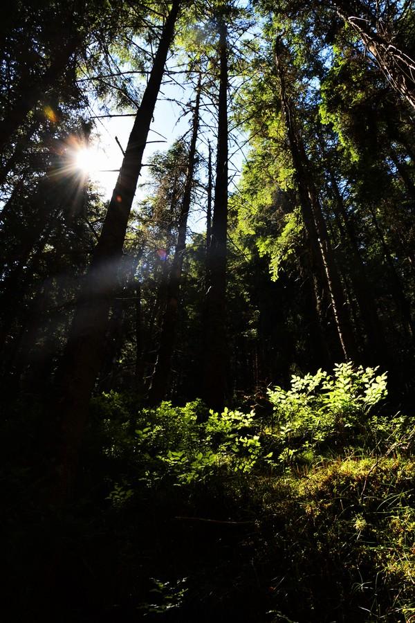 Lesní svit