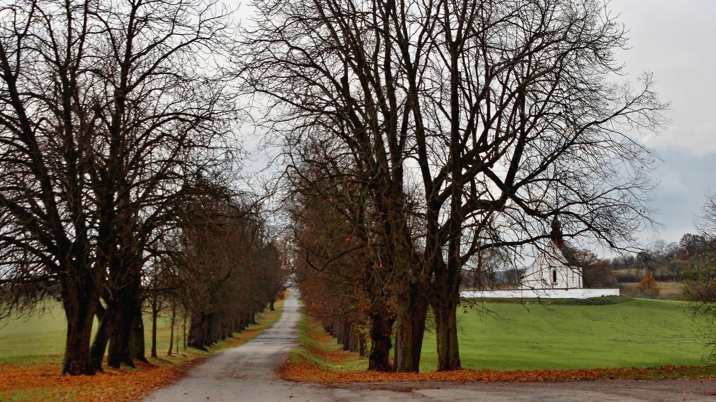 Cesta a kostelík u hradu Veveří....