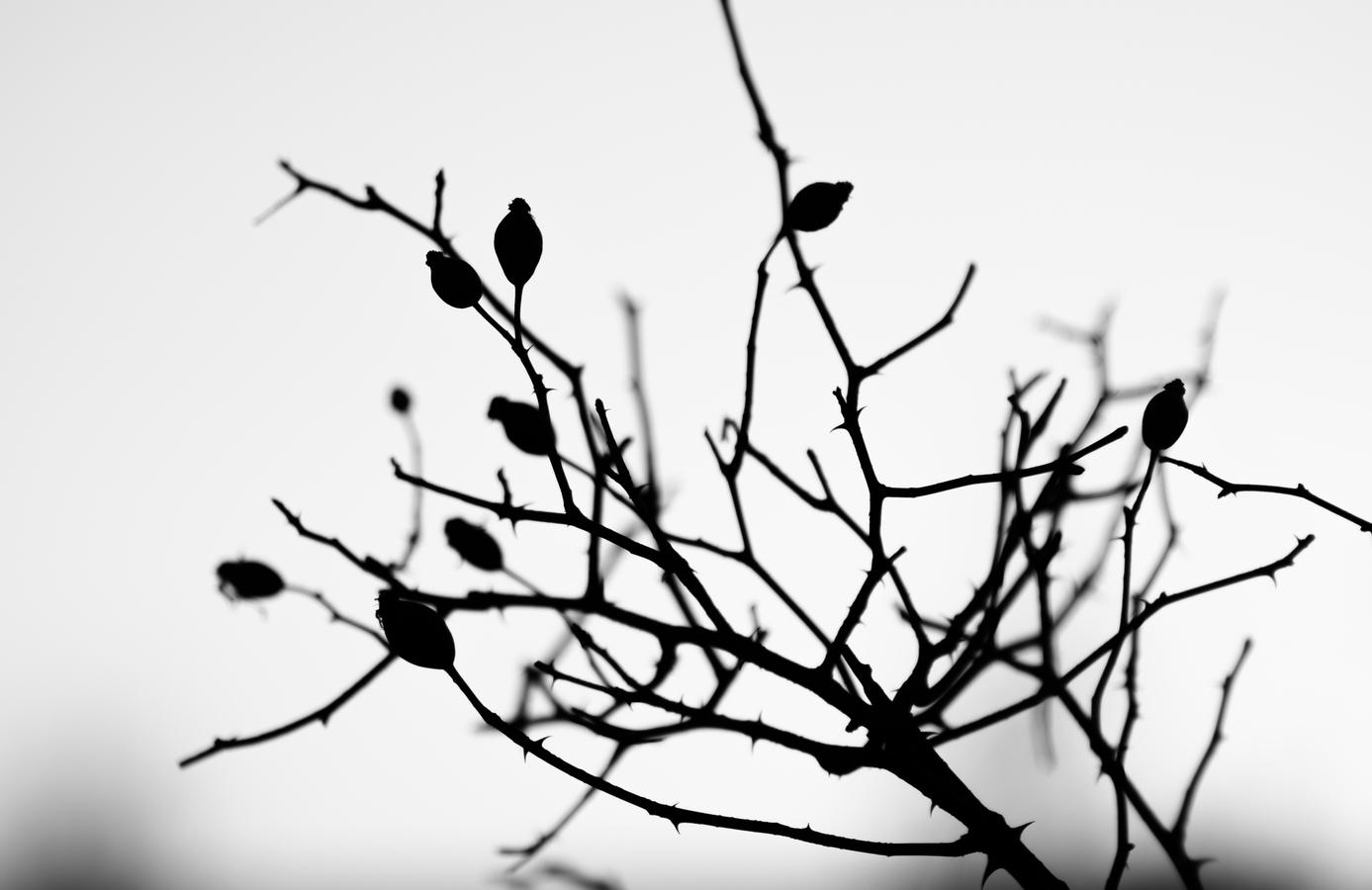 Podzim odchází, zima se blíží