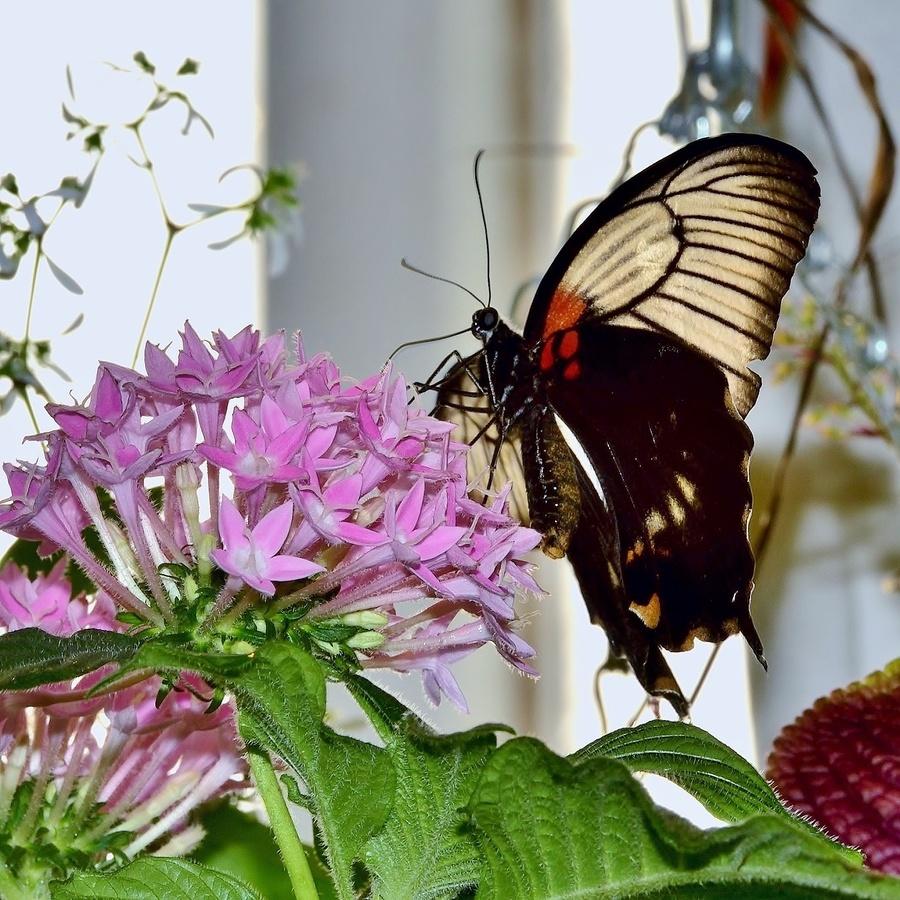 Schmetterling haus-Motýlí dům,Vídeň IV