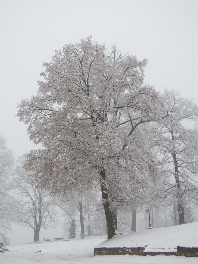 Po sněhové nadílce