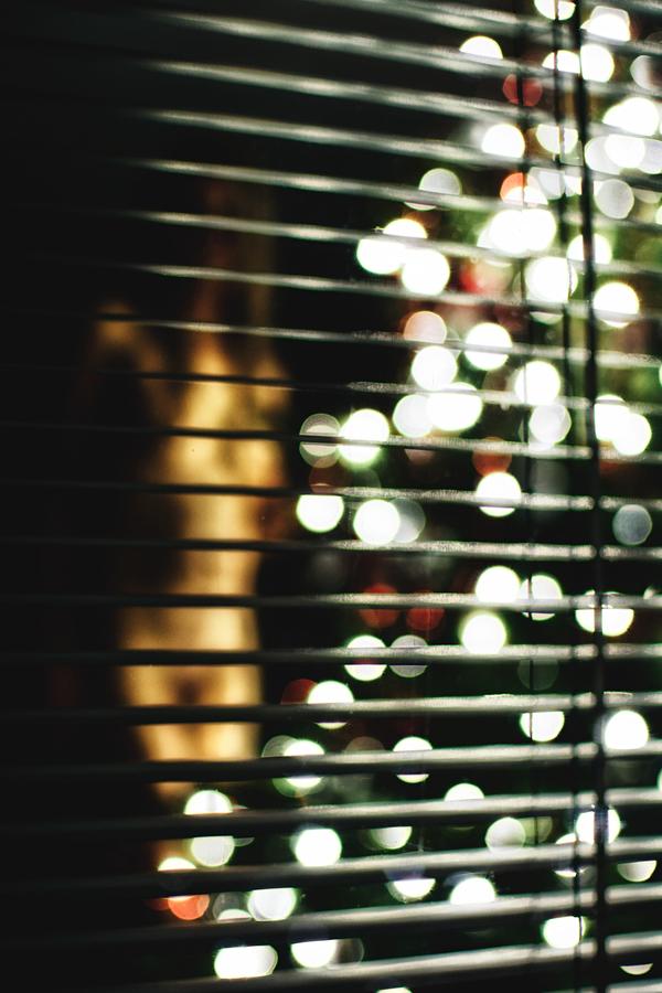 Voyeur's Christmas