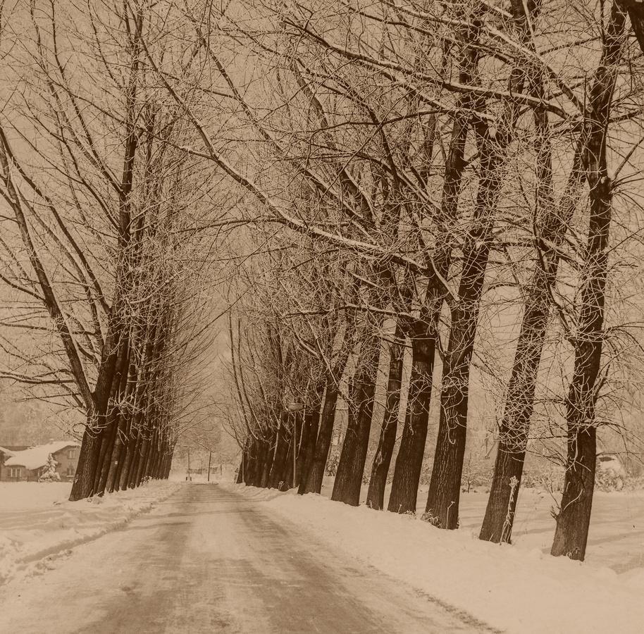 Zima v roce 1988