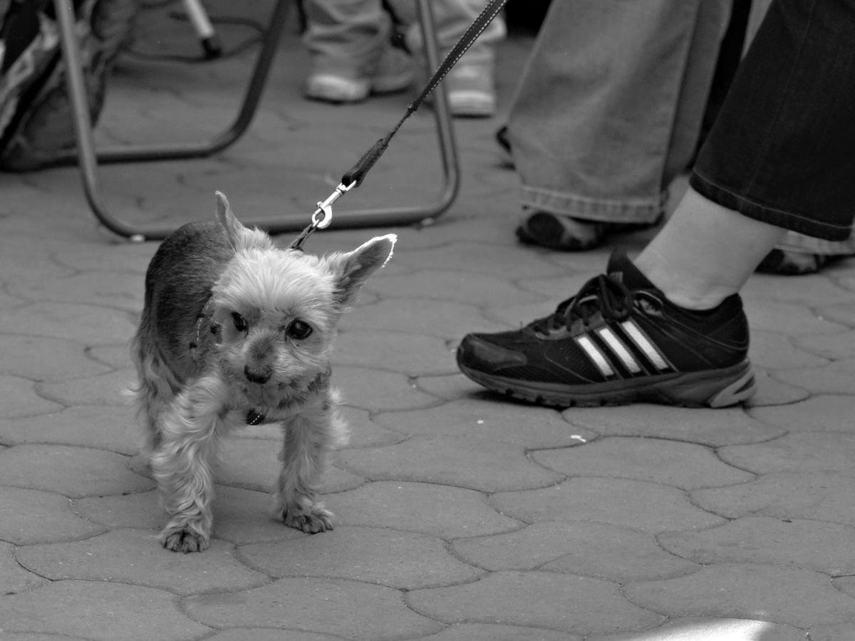 Pes nebo netopýr?