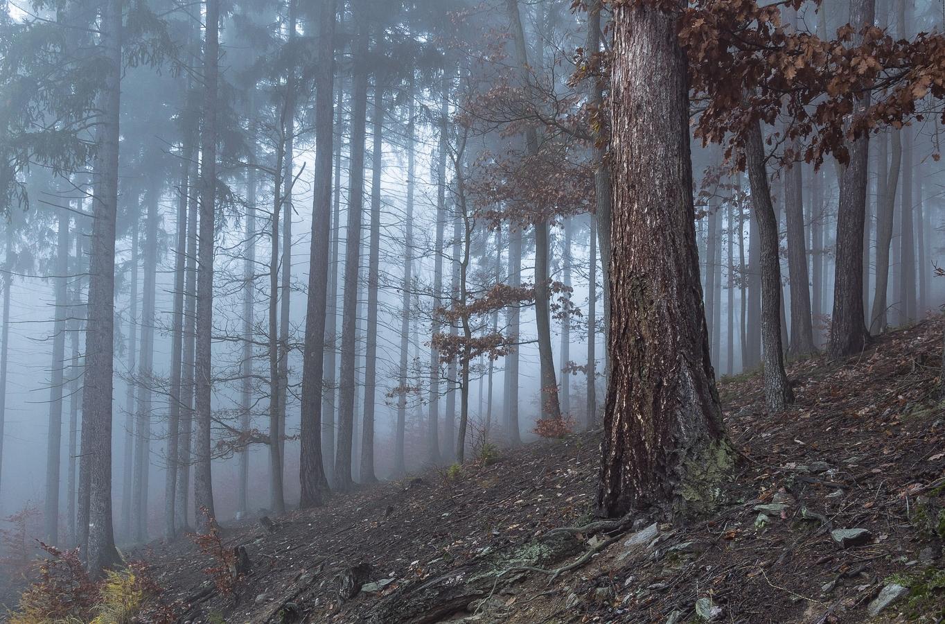 Lesní ticho
