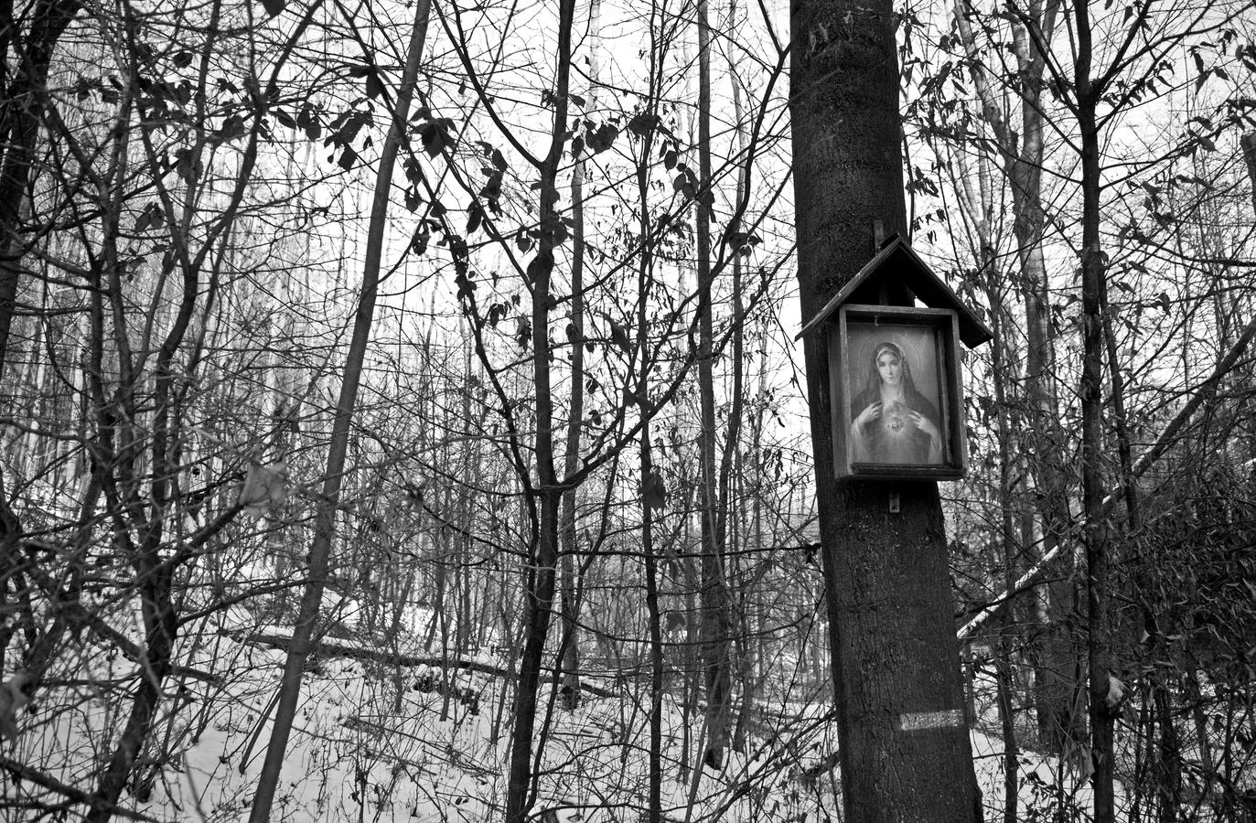 Panna Maria a zasněžený les