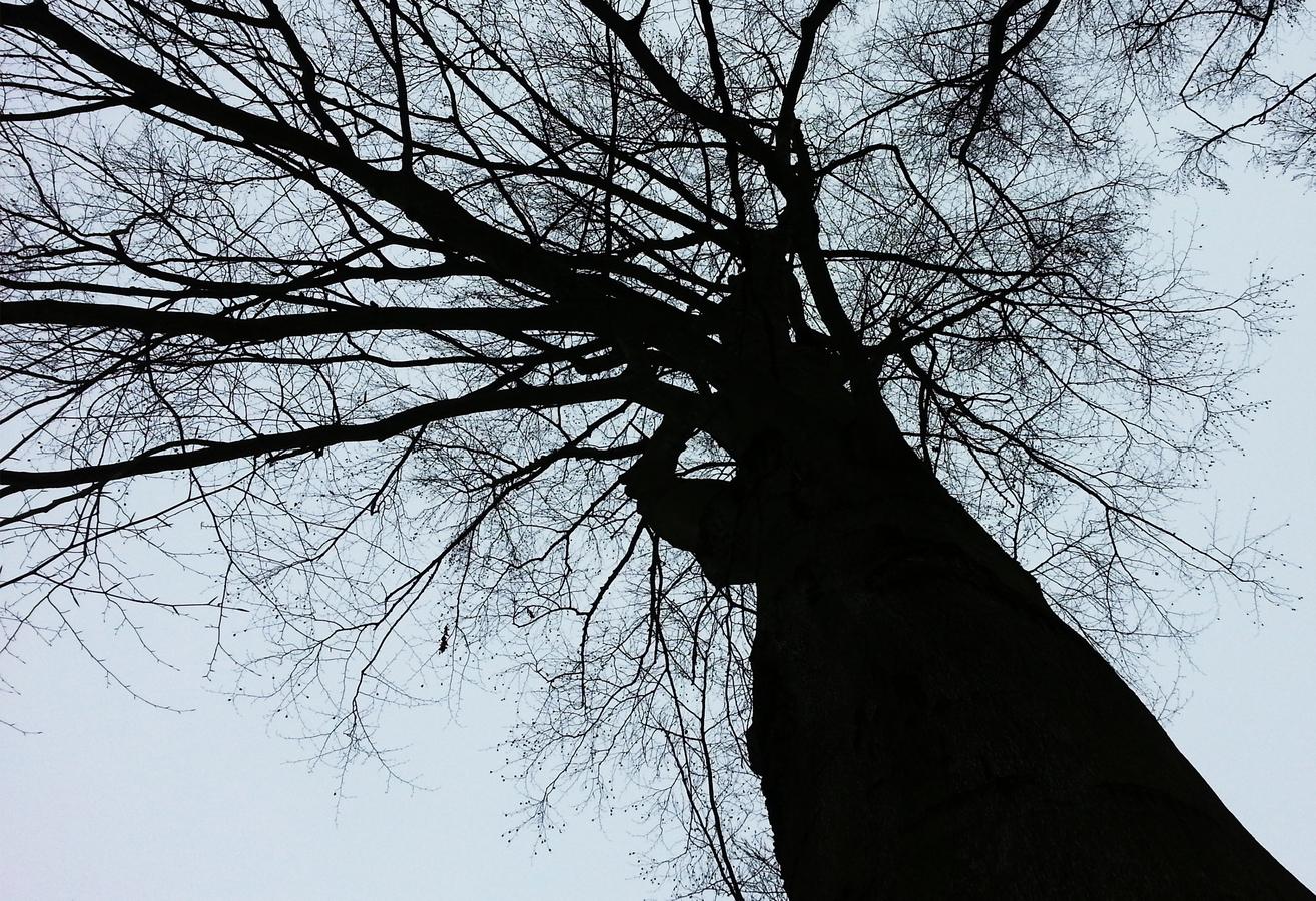Strom představivosti ....