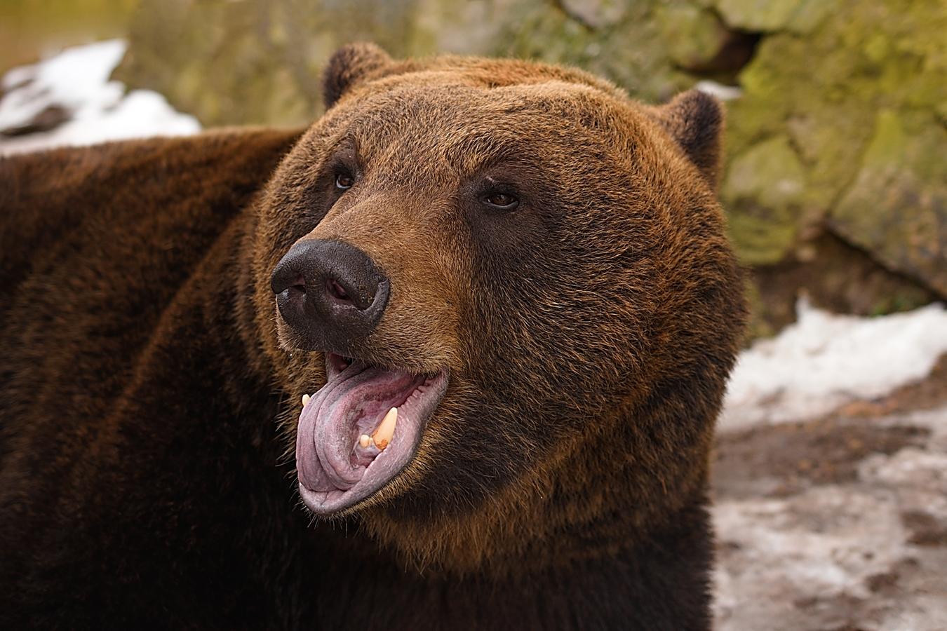 Hlídač - někdo má psa a někdo medvěda