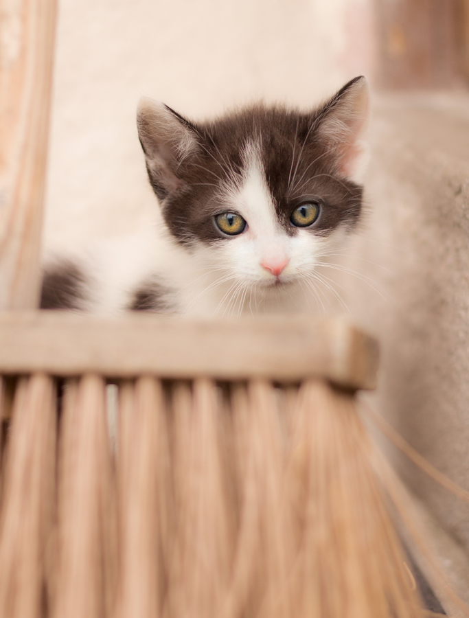 Být kotětem