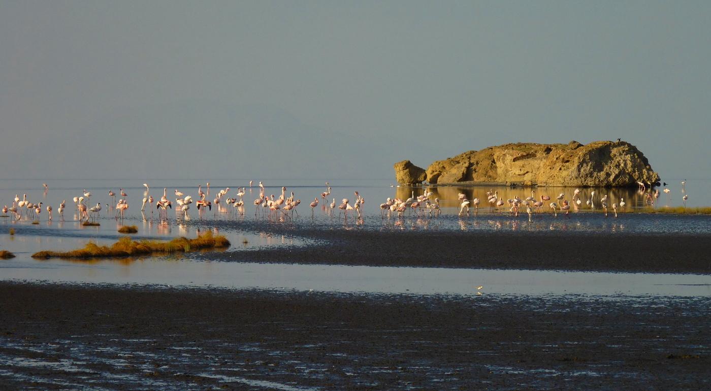 Plameňáci na jezeře Natron