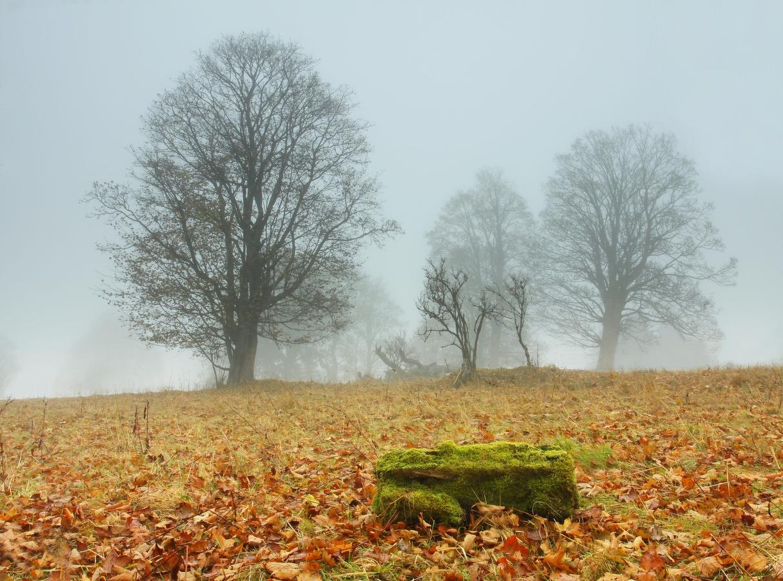 Šumava - mlhavé ráno na Kepelském Zhůří