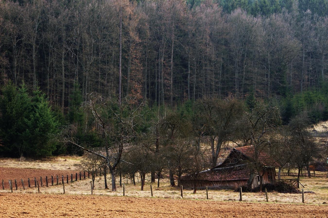 Chaloupka u lesa