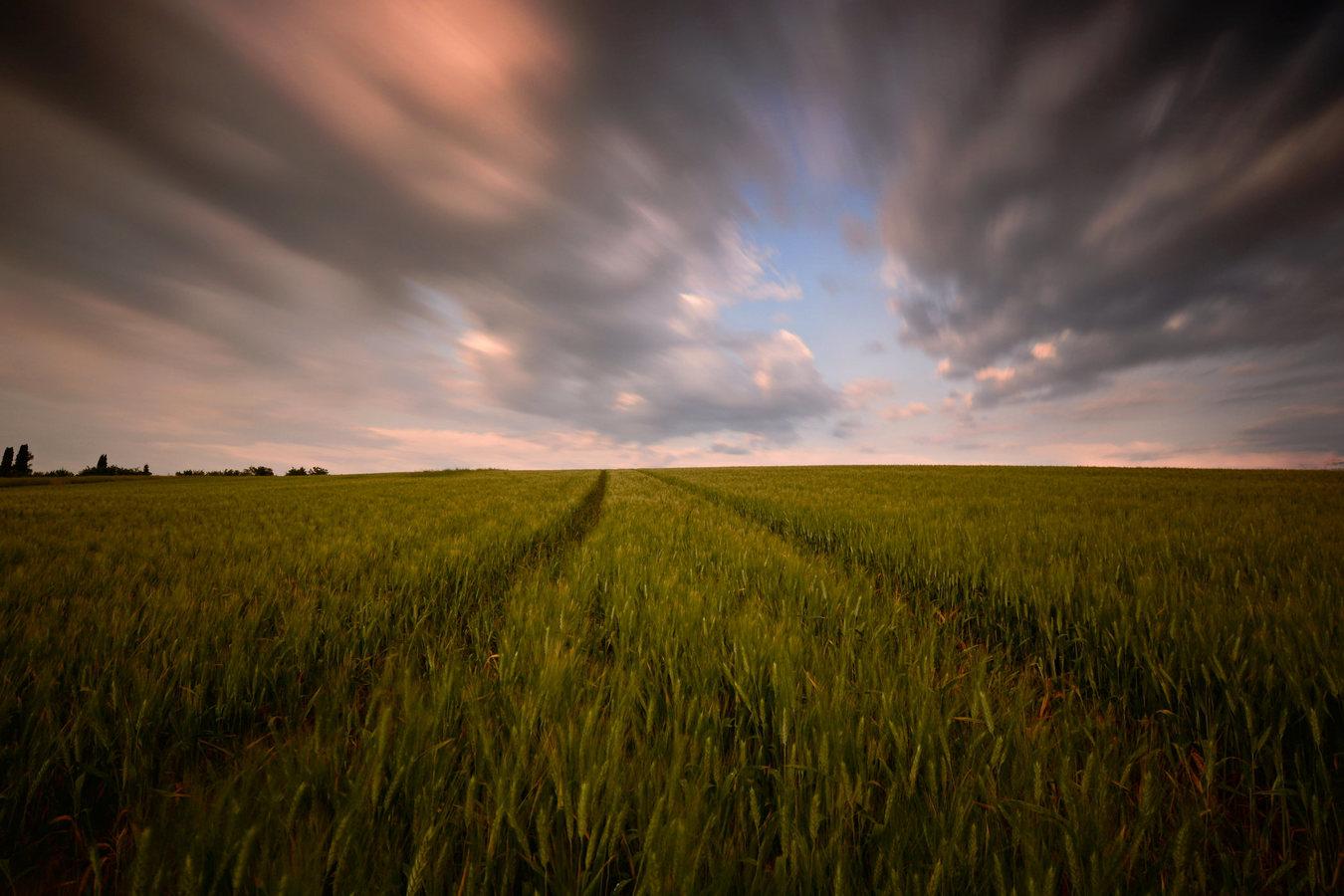 poľné búrkovo