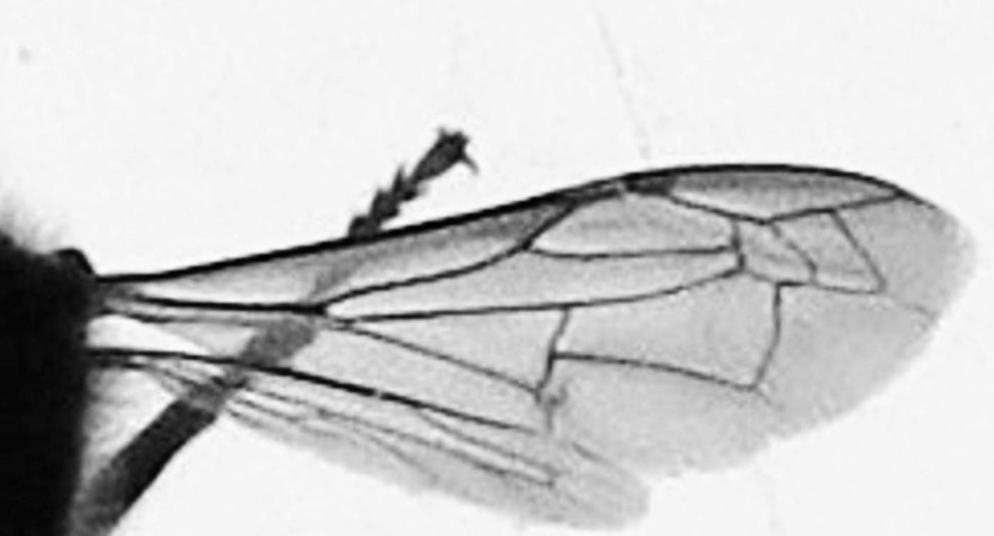 Pravé křídlo