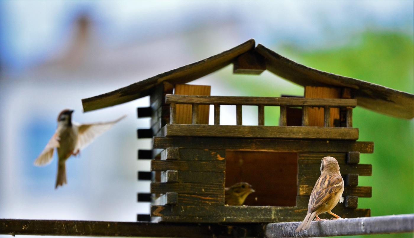 Ptáček sleduje přistávání svého kolegy.