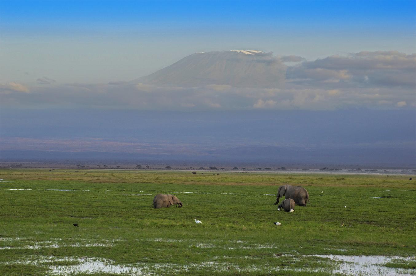 Soumrak pod Kilimandžárem