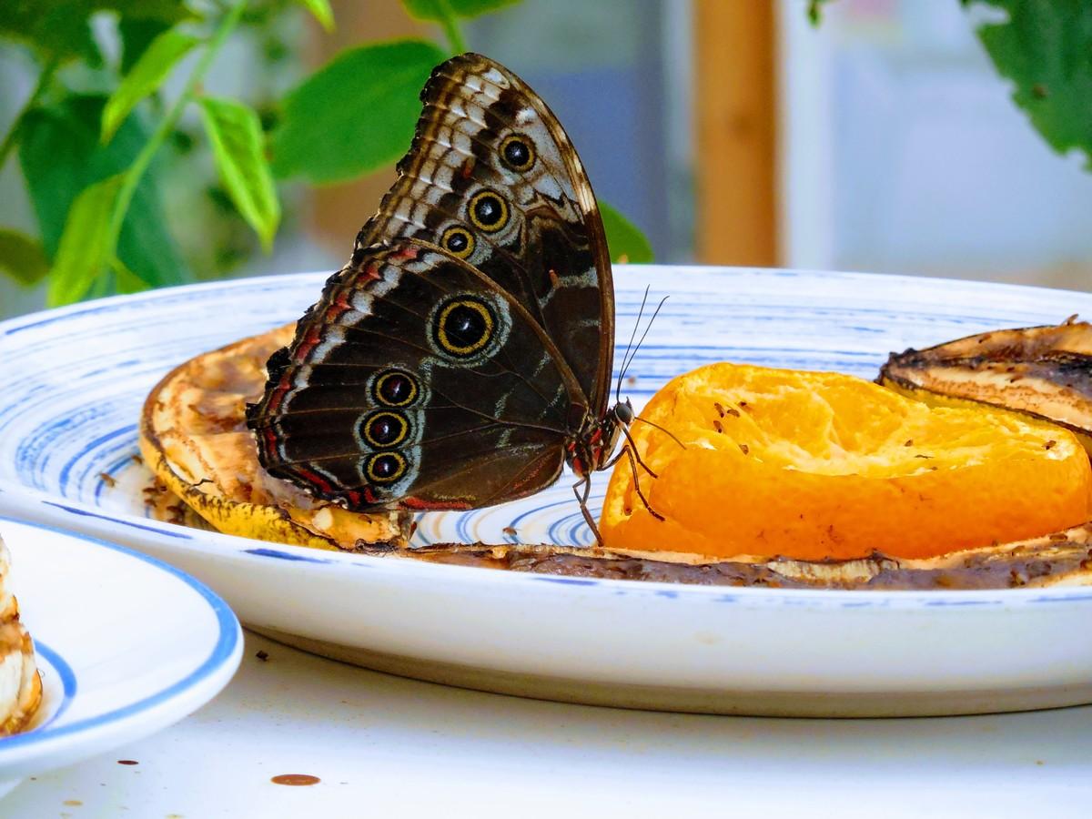ze života motýlů