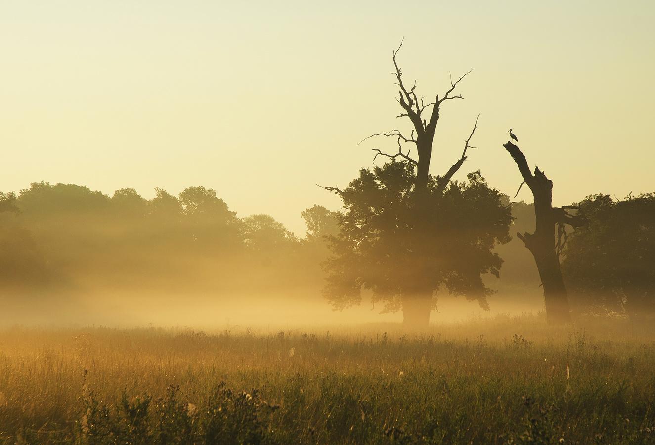 Poezie v mlze na Pohansku