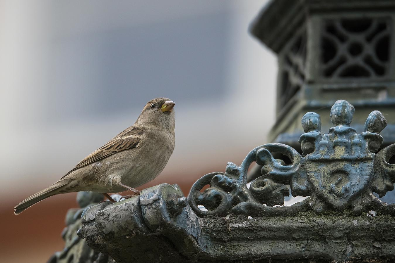 Vrabčák - Pražák ...