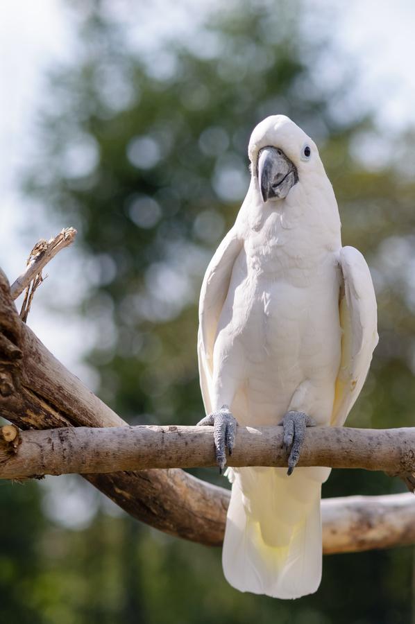 galerie bílý pták staří muži s velkými ptáky porno