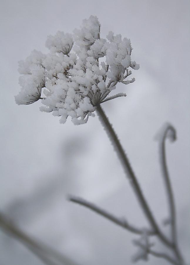 Zimní květ