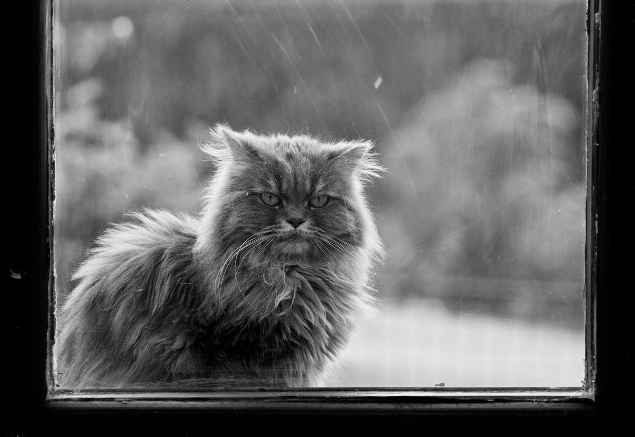 Za oknem čekala kočka a venku štěkal pes
