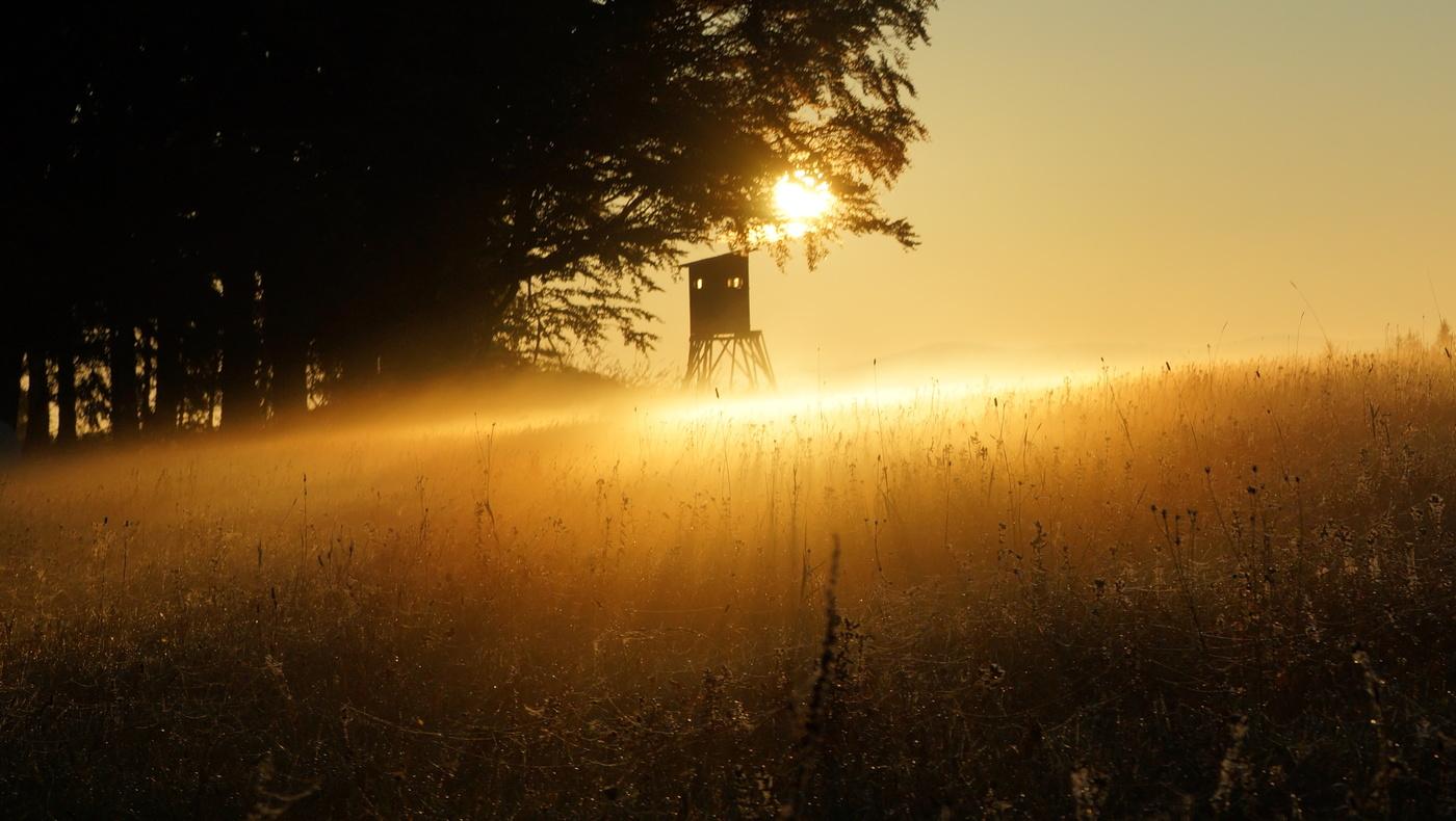 Ráno na louce