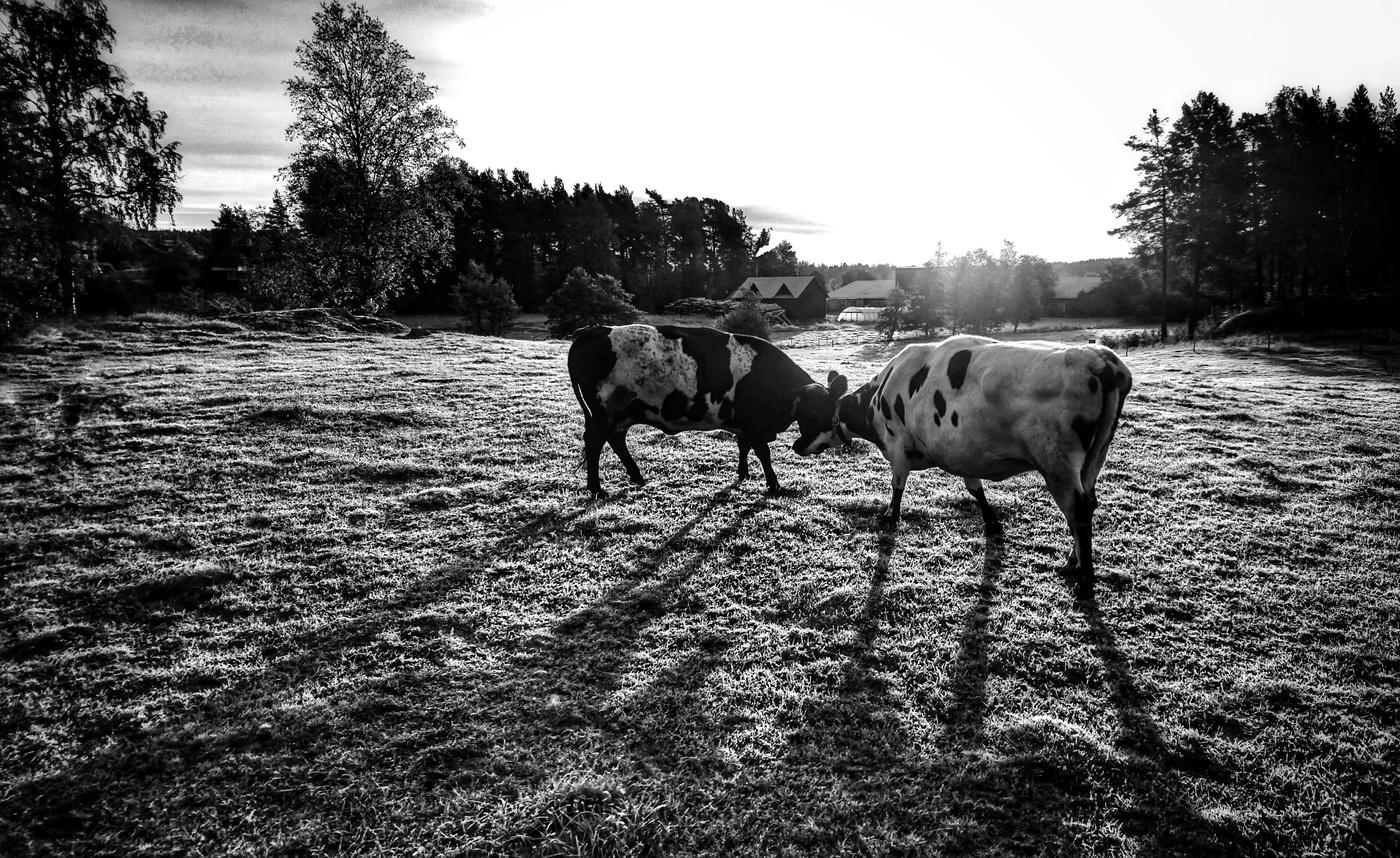 Ráno na pastvě