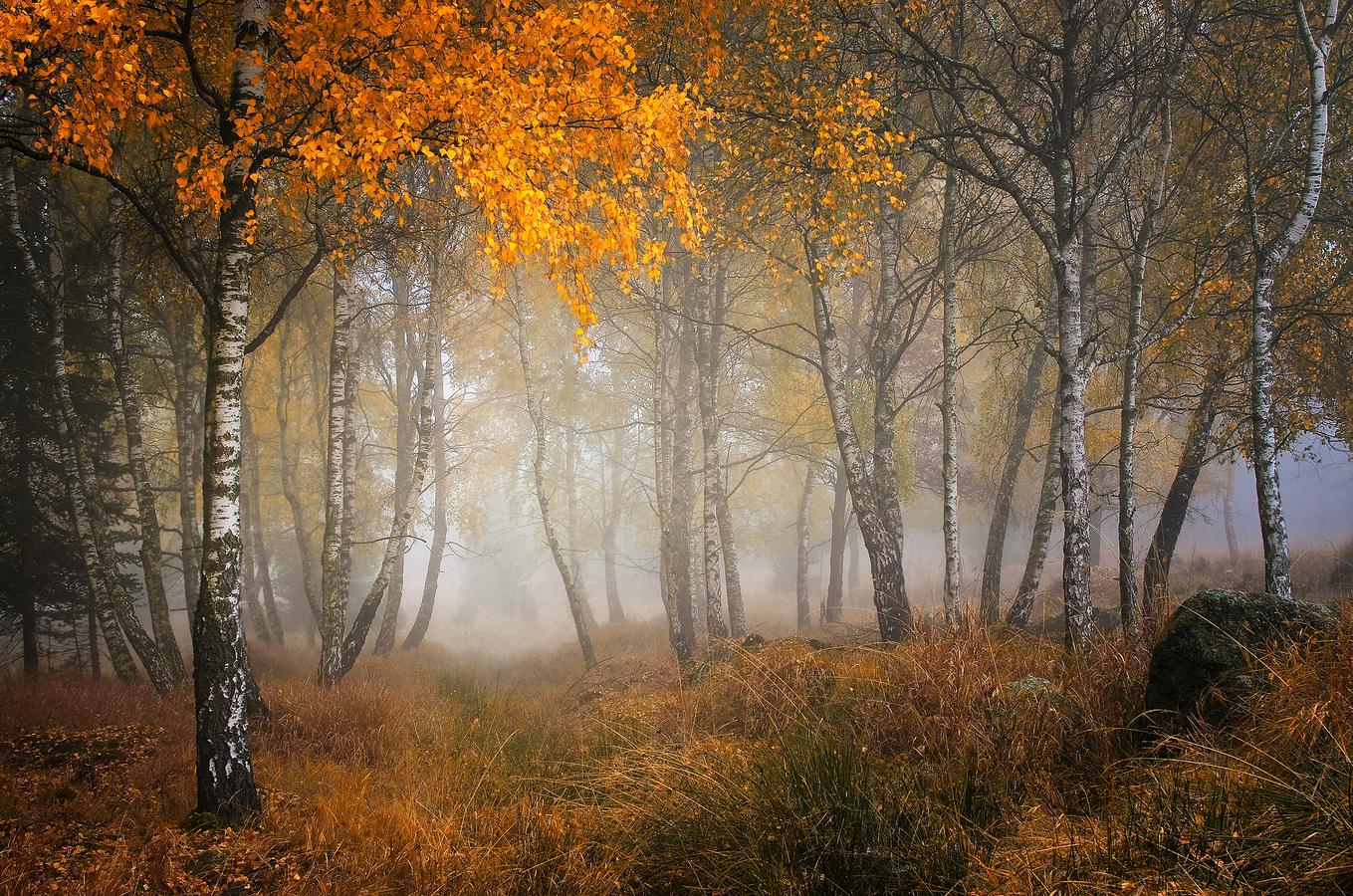 ...lesy Krušné, tajemné