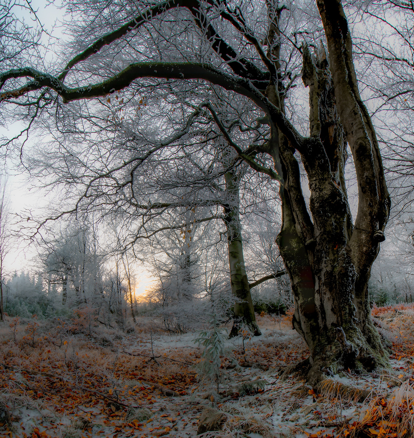 Zmrzlý les