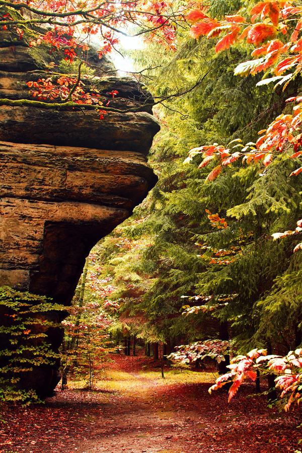 Podzimní lesní cesta.