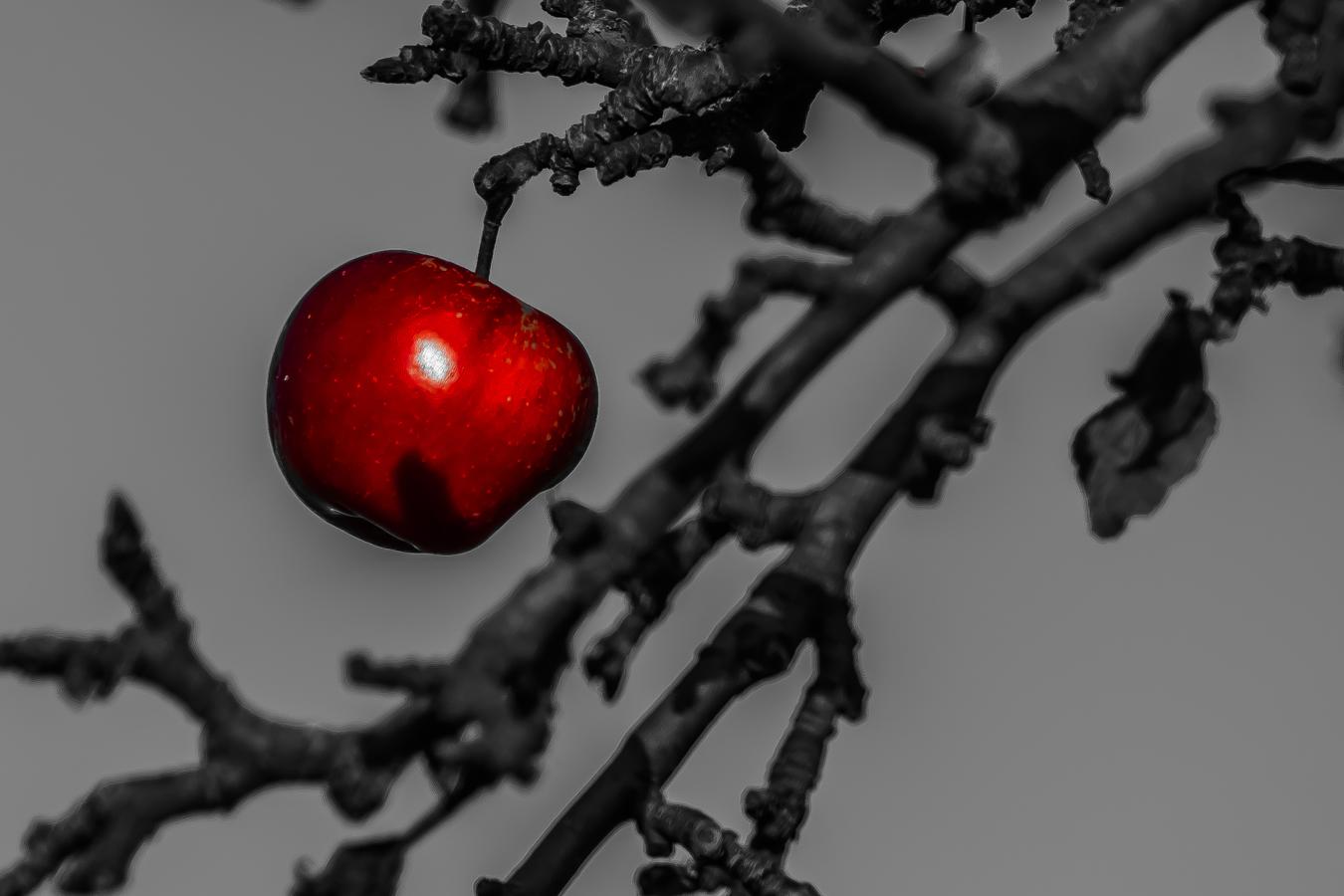 . . . . poslední jablíčko