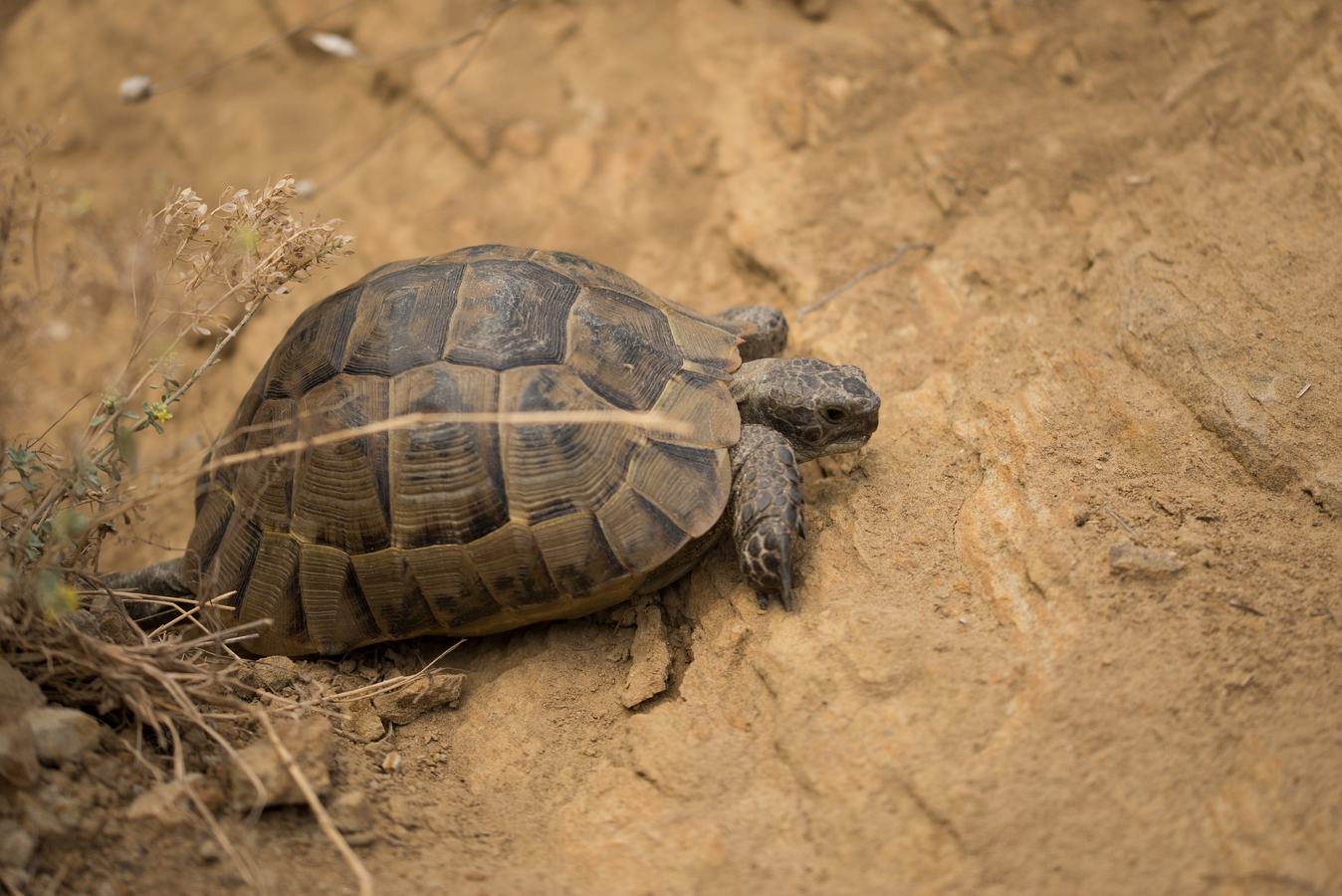 Želva na procházce