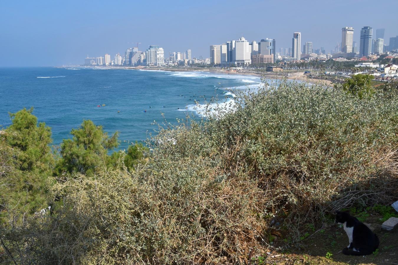Jaffa v Izraeli