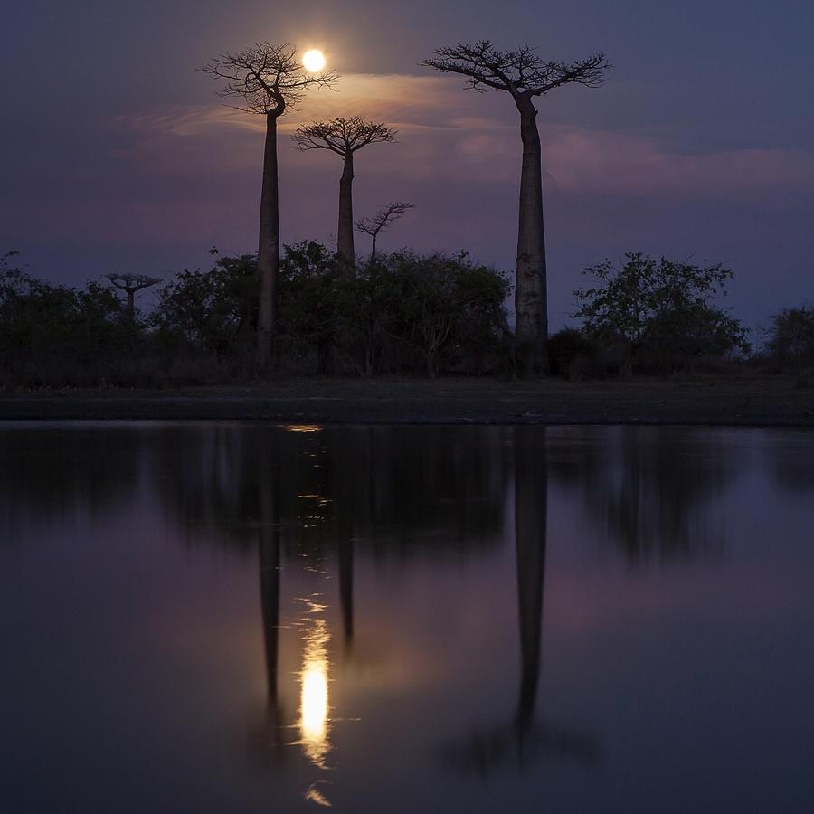 když nad baobaby vyjde měsíc