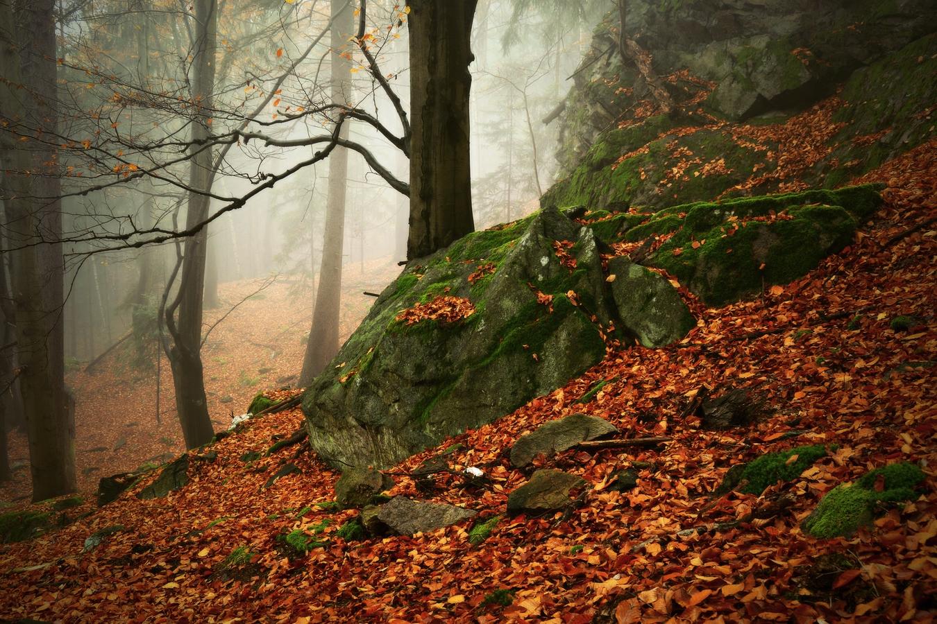 Lesní atmo...