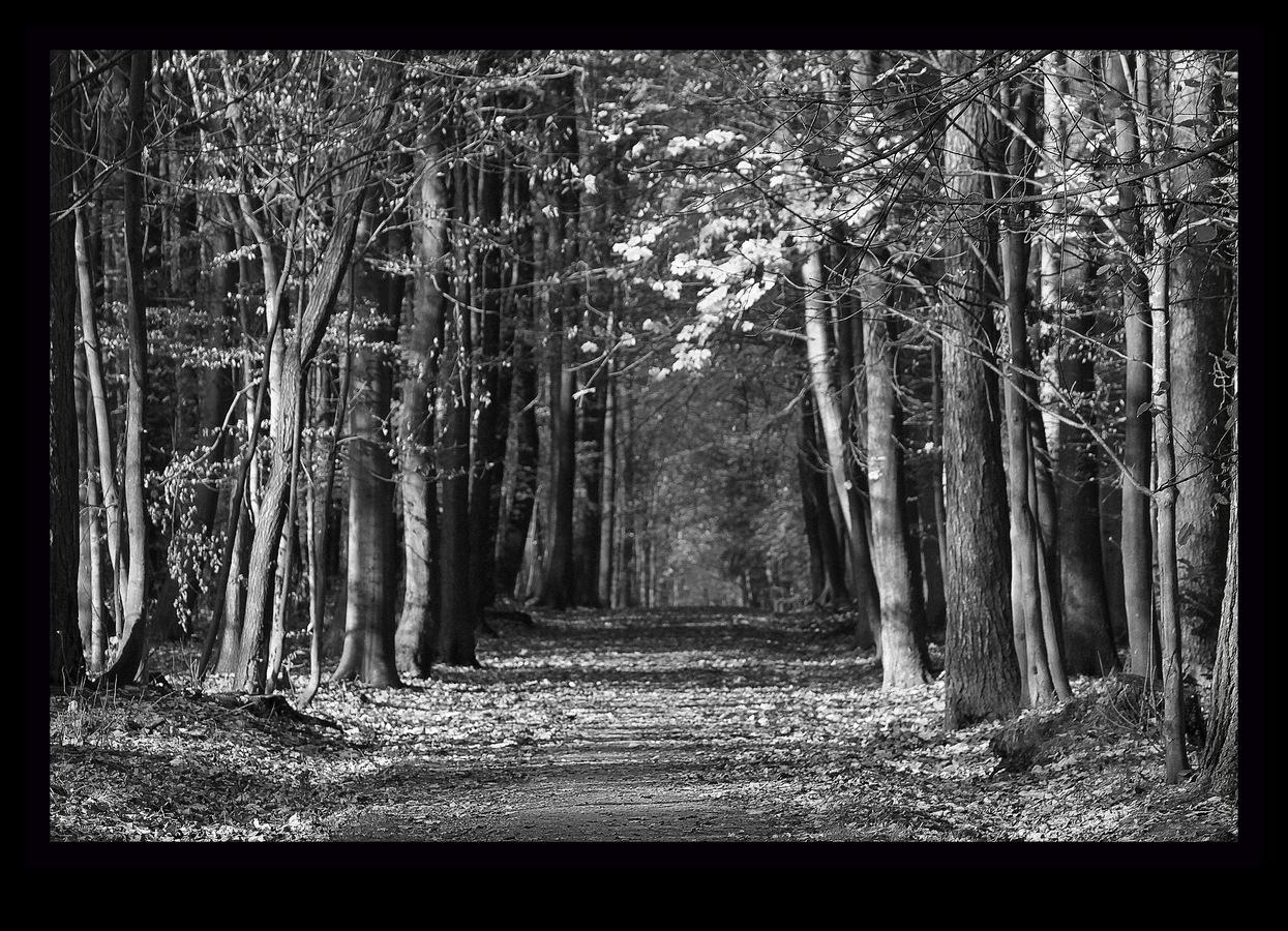 v lese, lese, za jehličím, je tam listí....