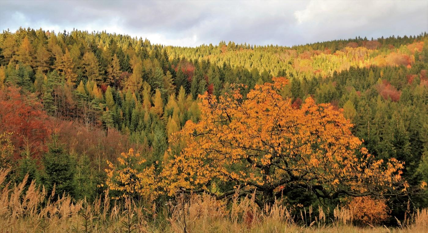 podzimní okolí Pulčína