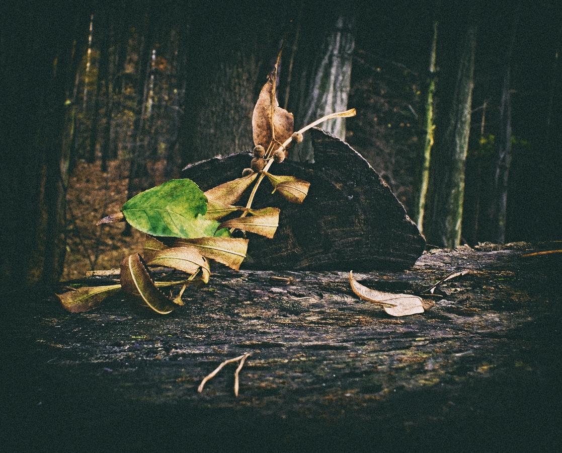 podzimní zátiší I